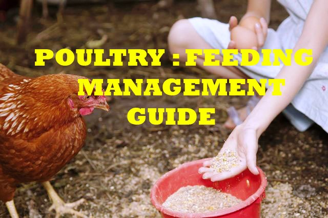 HOW and WHAT to FEED CHICKENS with