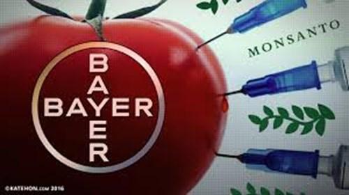 Bayer Company