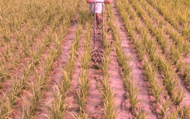 kharif sowing
