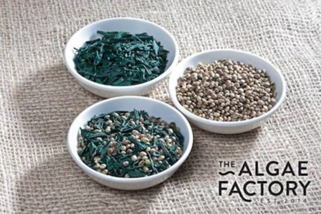 algaecanapa
