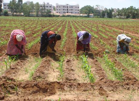 types of farming in india