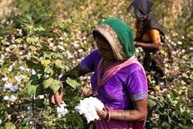 Eco Farming to Promote Organic Cotton with Bio Fertilizers from
