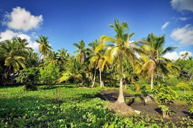 maldives wildlife