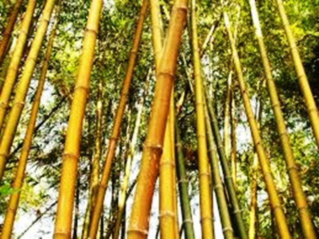 India to be a Leader in International Bamboo Export