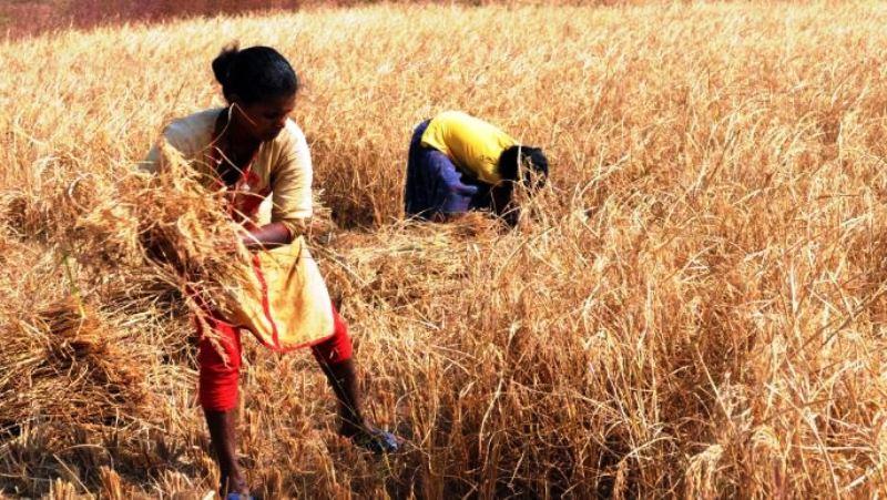 Jharkhand farmers