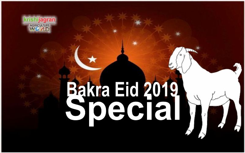 Eid 2019: When is Bakra Eid? Know its Importance & Eid ul