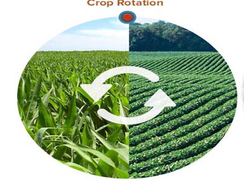 Crop rotation