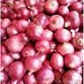 Government's Initiative to Control Rising Onion Prices in Delhi