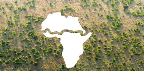 Great Green Wall Initiative Aims to Restore 100 million Hectares of Degraded Land, Create 10 million Green Jobs by 2030