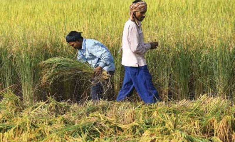 pension farmers