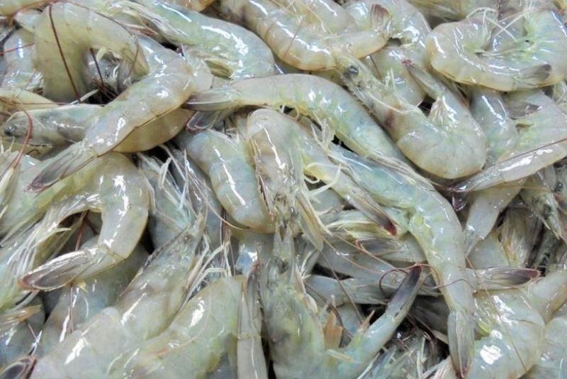 indian shrimps
