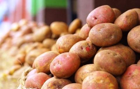A Complete Guide to Potato Plantation
