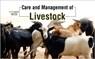 Livestock Management: How to Take Care of Farm Animals in Rainy Season