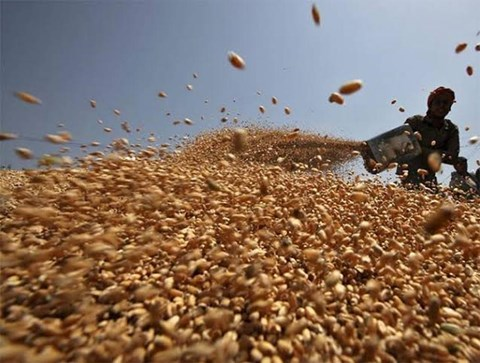 Wettest Monsoon in 25 Years Could Lift India's Wheat Production to Record in 2020