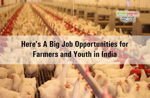 Huge Employment Opportunities for Youth and Farmers; IB Group to Start Poultry Business across India