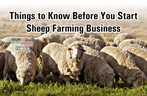How to Start a Profitable Sheep Farming Business in India? Tips and Tricks to Follow