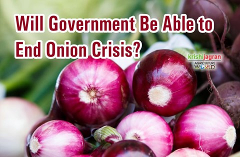 Government Orders over 36,000 Metric Tonnes of Onions to End Ongoing Crisis; Imports at 5-year High