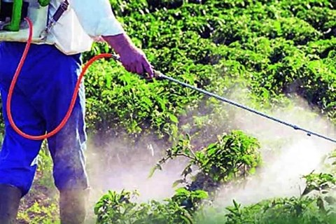 Government to Revoke License of Pesticide Sellers without Degree; How to Get New License