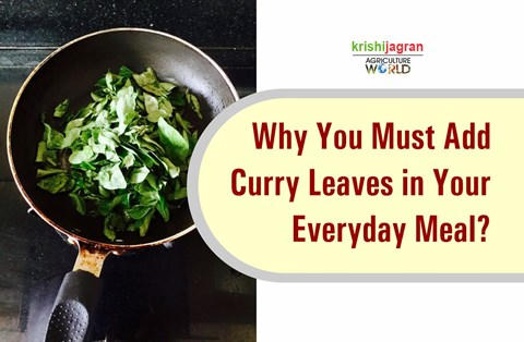 Curry Leaves: Add Kadi Patta in Your Everyday Meal to Get These Surprising Health Benefits