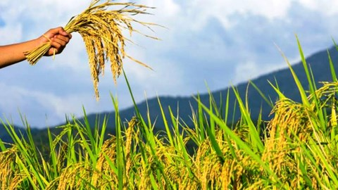 Good News: Insurance Firm to Pay Heavy Compensation to Farmers for Crop Damage