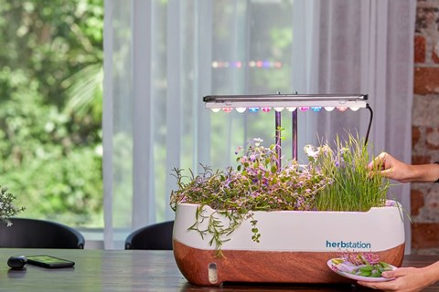 Start Your Microgreen Profitable Business at Home