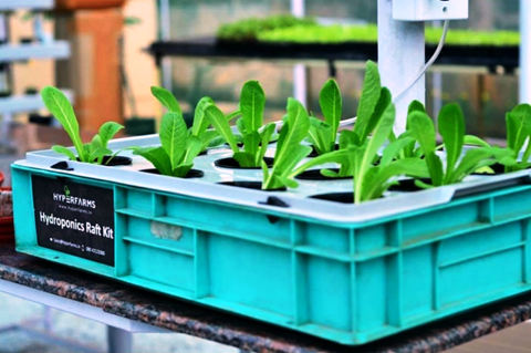 Setting up a Hydroponic Profitable Business at Home