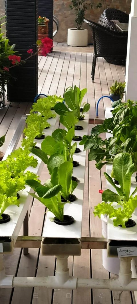 Get Fresh Flowers, Green Plants, Fresh Leafy Greens with Barton Breeze's Hydroponic Home-kit