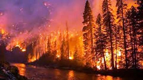 Stubble Burning and Forest Fires Influencing Melting of Gangotri Glacier