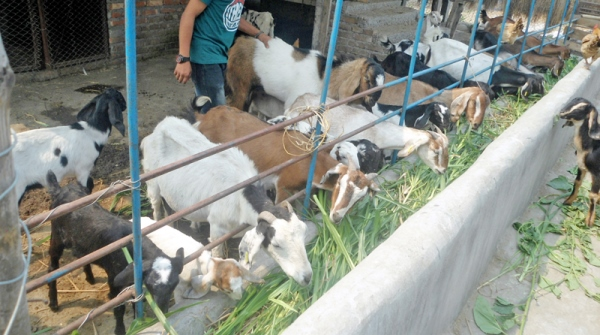 2 month GOAT FARMING TRAINING PROGRAM, for agri-entrepreneurs