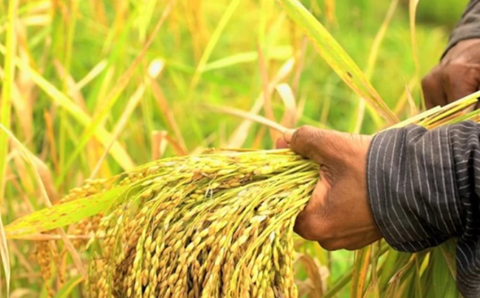 CropLife India Urges Government to Allow Agrochemicals during Lockdown for COVID-19
