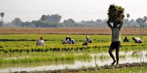 Good News for Tamil Nadu Farmers: Norms Relaxed for Agriculture Activities & Transport of Essentials