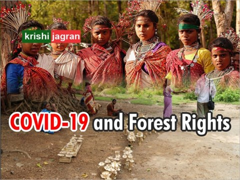 COVID-19 and Forest Rights: Impact of Coronavirus and Lockdown on Tribal & Forest Dwelling Communities