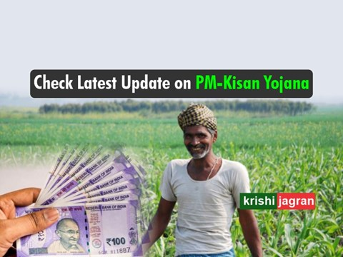 PM Kisan Samman Nidhi Scheme: 8.19 crore Farmers Receive Rs. 2000; Direct Link to Check Status, Payment Details