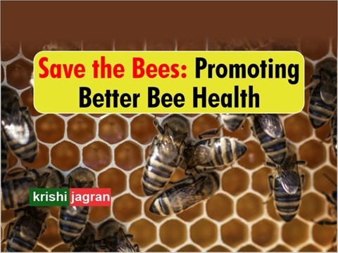 World Bee Day 2020: How Beekeepers Can Ensure Longer & Healthier Lives of their Bees