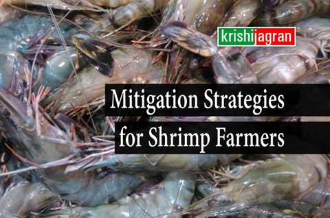 Covid-19: College of Fisheries Organizes Industry- Farmer- Academia Webinar for Shrimp Farmers