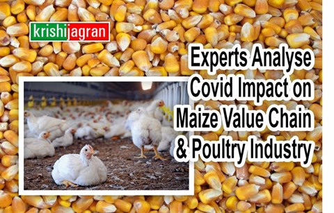 Cluster Approach Should Be Followed by Poultry industry for Market Linkage with Maize farmers, FPOs: Agriculture Commissioner