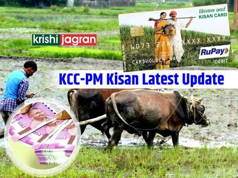 Kisan Credit Card Latest: How PM-Kisan Beneficiaries Can Easily Get Loans Through KCC; Details Inside