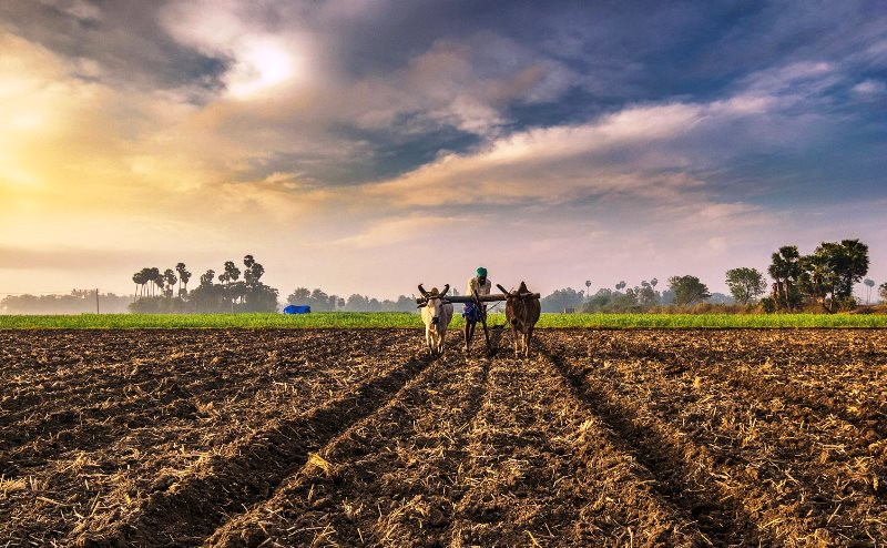 Khet to Kirana could be the Future of Agritech for Farmers & Consumers