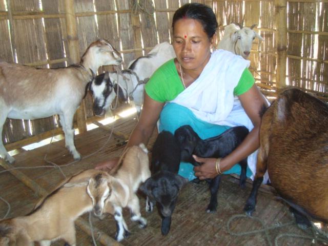 Rearing Goat Gives Billion Hero Of Assam