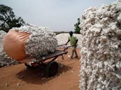 Cotton Exports may touch 7 Million Bales