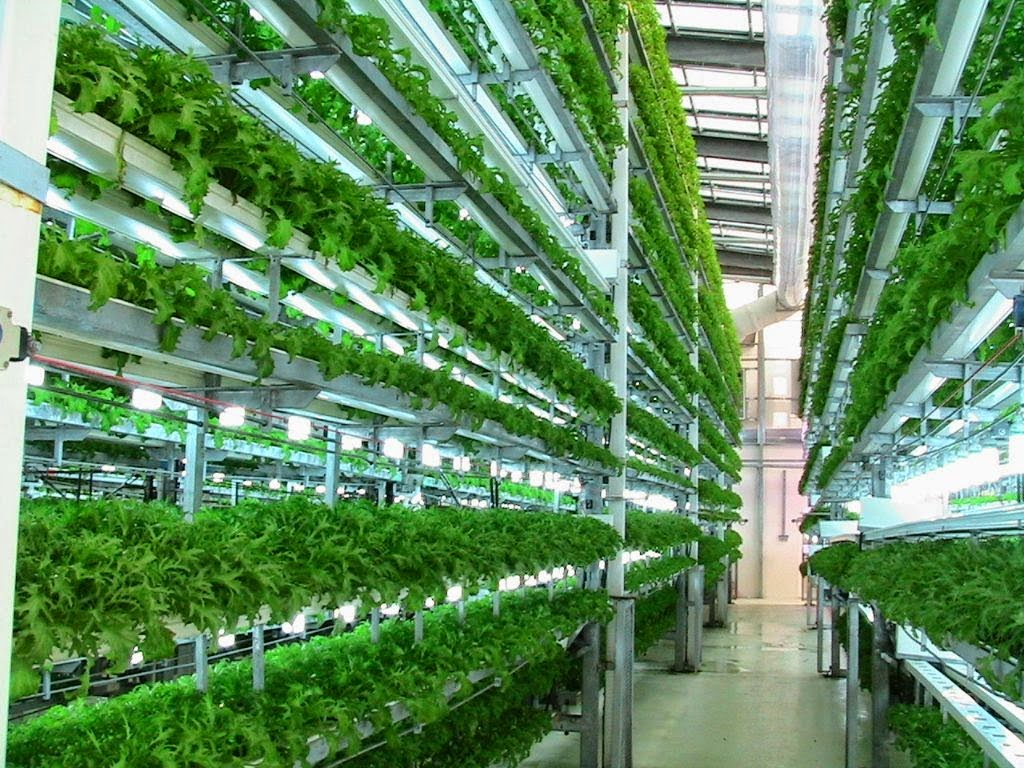 all about vertical farming modern agriculture. Black Bedroom Furniture Sets. Home Design Ideas