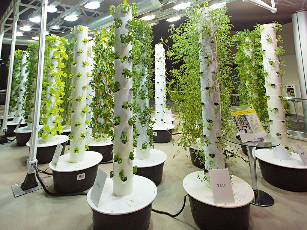All about Vertical Farming- Modern agriculture