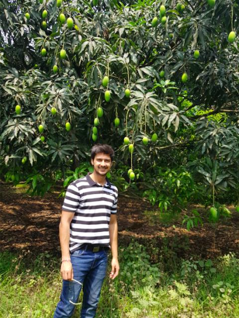 Earn Lakhs through Organic Mango Farming