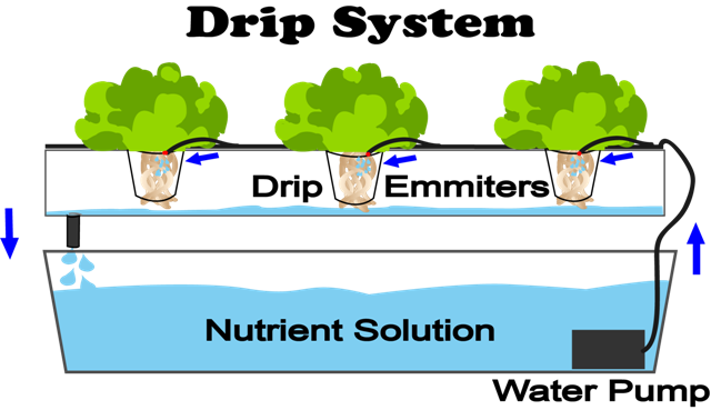 Grow plants without soil
