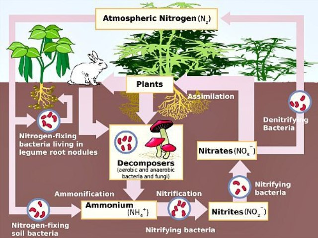 Explained : 14 nutrients required by Plants for best growth