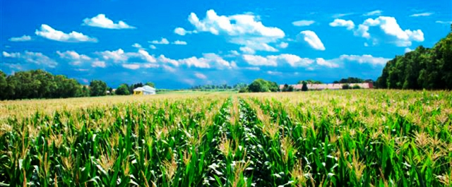 Top 7 banks providing easy loans to farmers